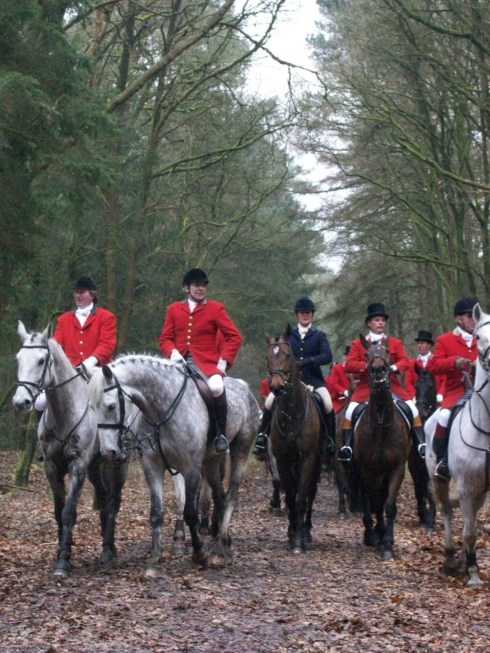 UK Government Re-ignites Debate on Fox Hunting 1
