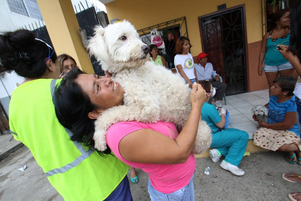 ecuador earthquake animals rescued
