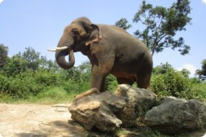 Sunder - The Story of One Indian Elephant's Fight for Freedom 1