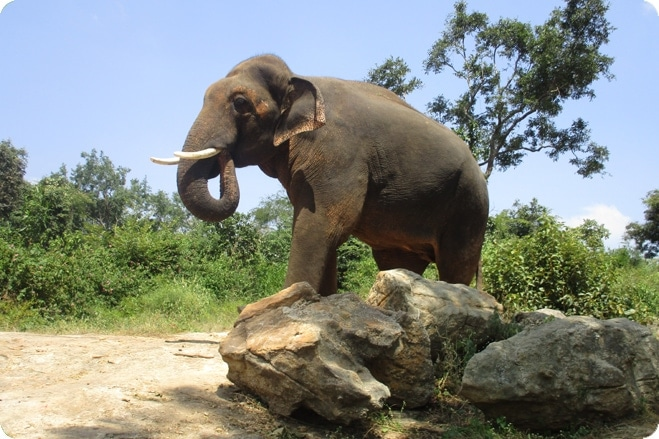 Sunder – The Story of One Indian Elephant's Fight for Freedom