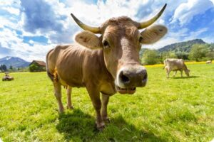 Five Things Would Happen if Everyone Stopped Eating Meat 1