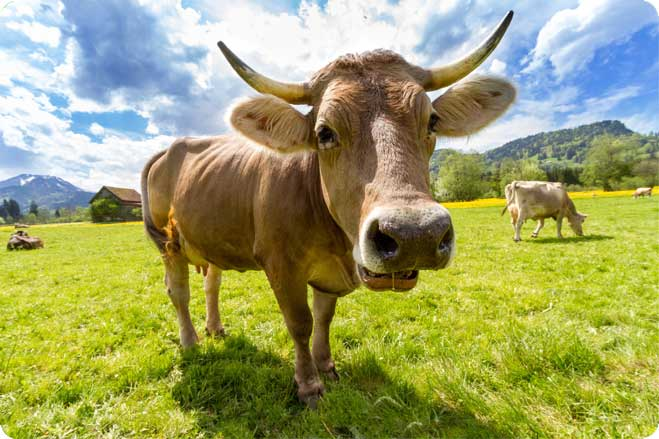 Five Things Would Happen if Everyone Stopped Eating Meat
