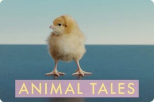 VIVA!'s Thought-Provoking New Pro-Vegan Short Film 'Animal Tales' 1