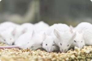 animal testing parent companies