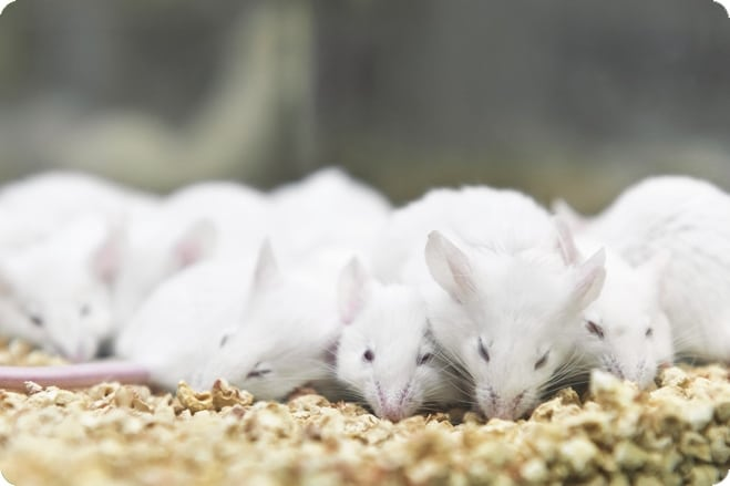 Animal Testing - Are Your Buying Habits Affected by Parent Companies?