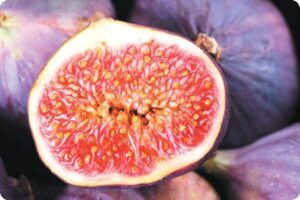 Debate: Should Vegans be Eating Figs? 2