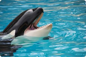 France bans breeding of captive killer whales and dolphins 4