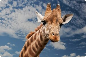 Debate: Should Vegans go to Zoos? 23
