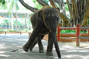New Report Reveals Over 75 Per Cent Elephants Living In Unacceptable Conditions 2