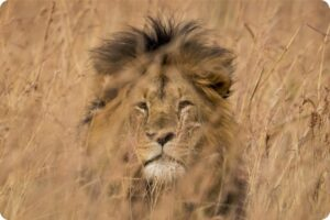 Xanda Killed By Trophy Hunters 15