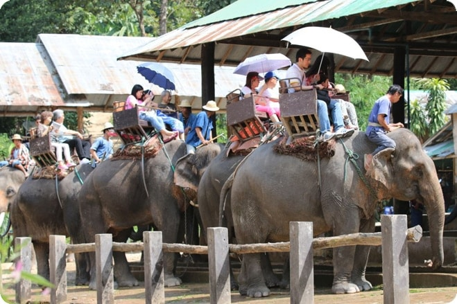 New Report Reveals Over 75 Per Cent Elephants Living In Unacceptable Conditions