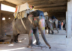 New Report Reveals Over 75 Per Cent Elephants Living In Unacceptable Conditions 1