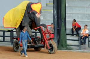 New Report Reveals Over 75 Per Cent Elephants Living In Unacceptable Conditions 4
