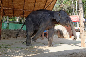 New Report Reveals Over 75 Per Cent Elephants Living In Unacceptable Conditions 3