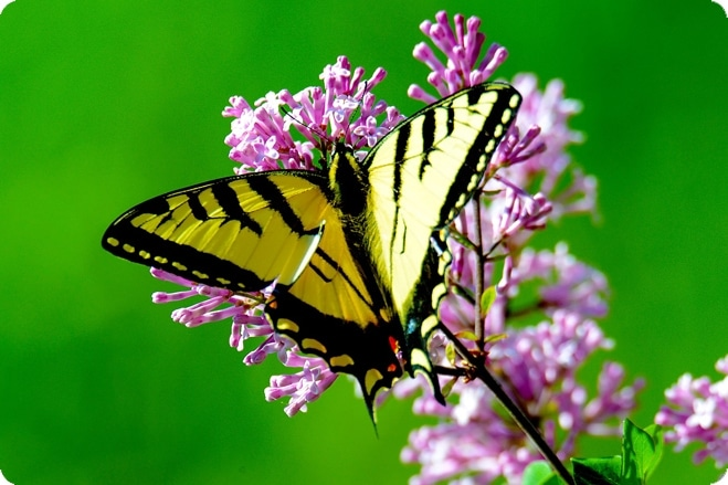 Make Your Garden A Butterfly Haven