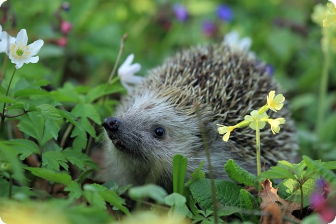 First Hedgehog Housing Census Launches