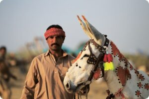 donkeys animal welfare the brooke pakistan kim willis