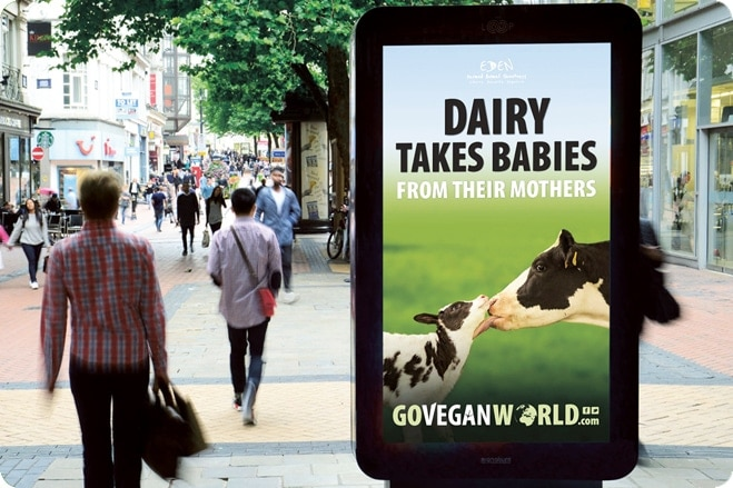 sandra higgins go vegan world campaign dairy Industry