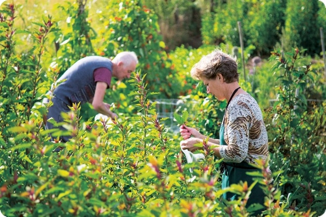 Yolande And Andrew - Taste Of Self Sufficiency