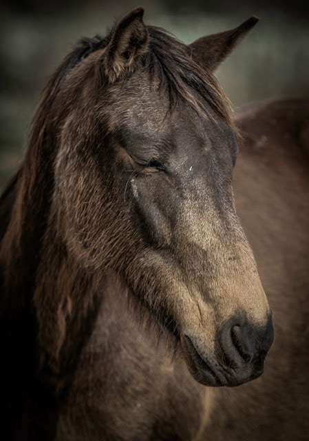 Animal Sanctuary Launches Lottery To Help Horses, Cats and Dogs 1