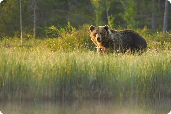British Columbia Bans All Hunting Of Grizzly Bears 1