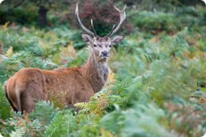 Royal Parks Cull More Than 11 Thousand  Animals 5