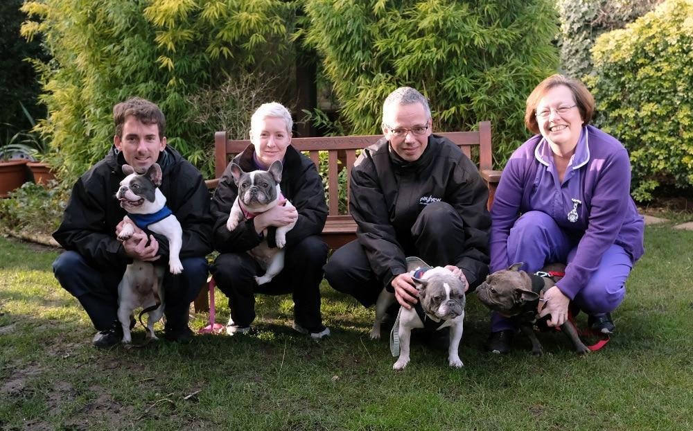 Animal Charity Handed Seven French Bulldogs in One Month 1