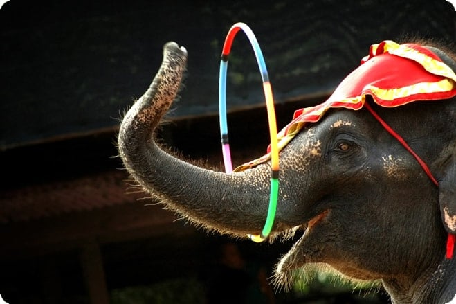 UK Government To Implement Ban On Circus Animals
