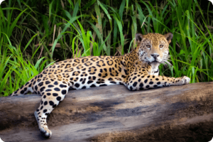 Animal Agriculture is Killing Native Animals in South America 3