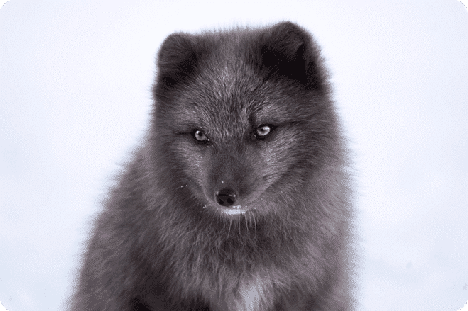 San Francisco Vote Unanimously to Ban Fur Sales in the City