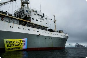 Krill Industry Exposed in New Greenpeace Report 13