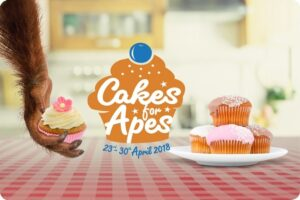 Cakes for Apes Campaign Started to Help Save Orangutans 14