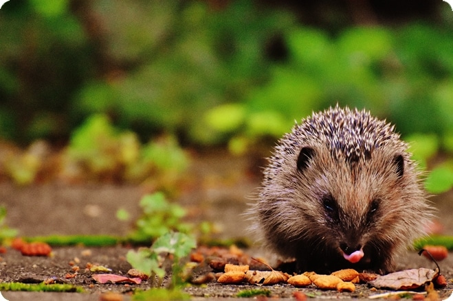 Volunteers Needed to Survey Gardens to Record Mammals