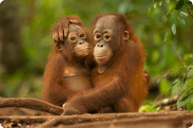 Iceland Announce a Ban on Palm Oil in Own Brand Products