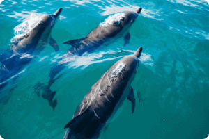 Richard Branson Announces New Plans to Work on Dolphin Sea Sanctuary 12