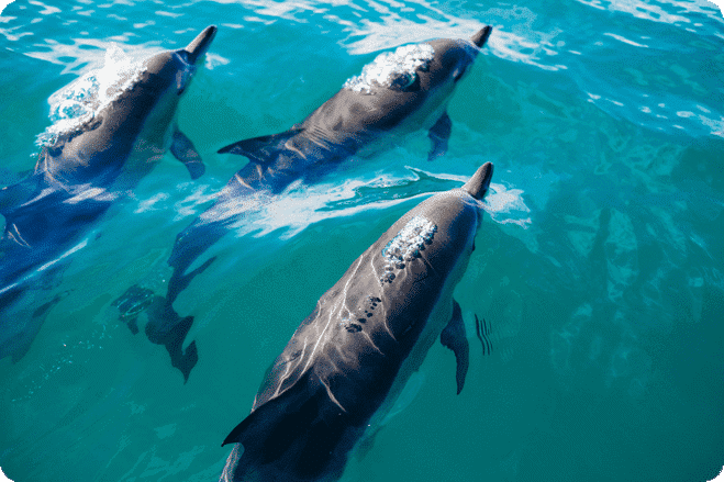 Richard Branson Announces New Plans to Work on Dolphin Sea Sanctuary