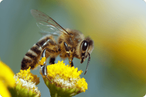 EU Bans Insecticides Contributing to Honeybee Losses 3