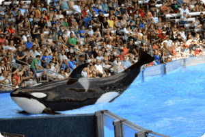 Thomas Cook Urged to Cut Ties with SeaWorld After Failed Audit 14