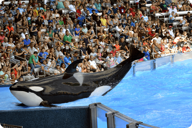 Thomas Cook Urged to Cut Ties with SeaWorld After Failed Audit