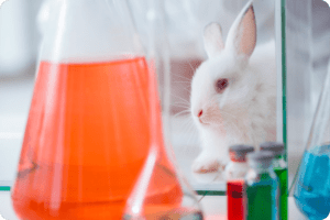 Artificial Intelligence could see the end of animal testing. 11