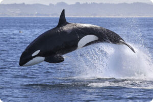 Thomas Cook to stop ticket sales for SeaWorld 4