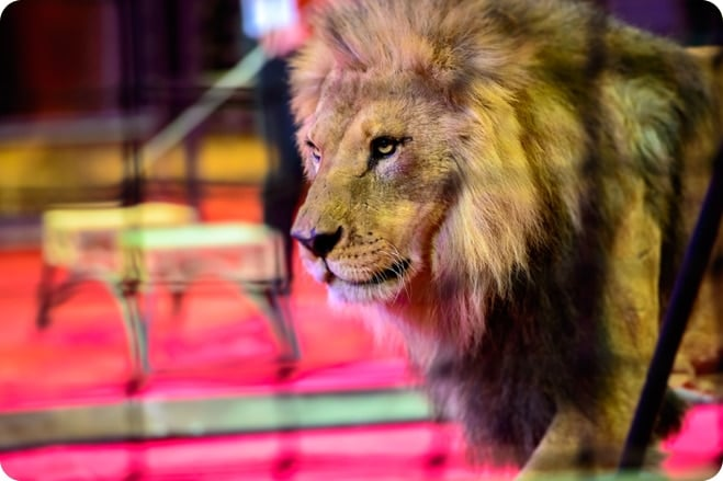 Freedom: Animals Rescued from Circuses in Guatamala