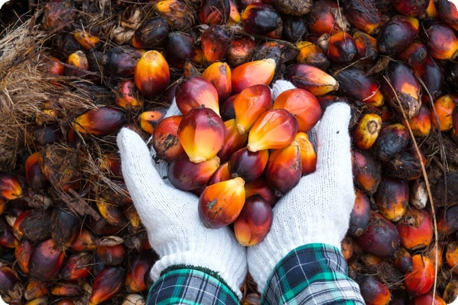 Iceland make waves with banned palm oil advert