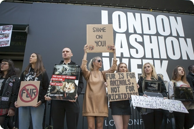 Vets warn designers showing fur at London Fashion Week breach show's animal welfare guidelines