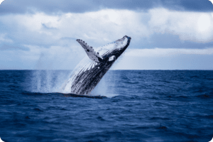 Bryan Adams acts as human shield to save whale 20