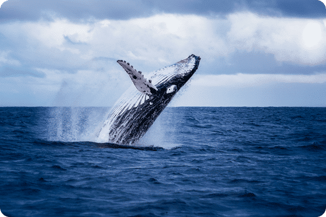 Bryan Adams acts as human shield to save whale
