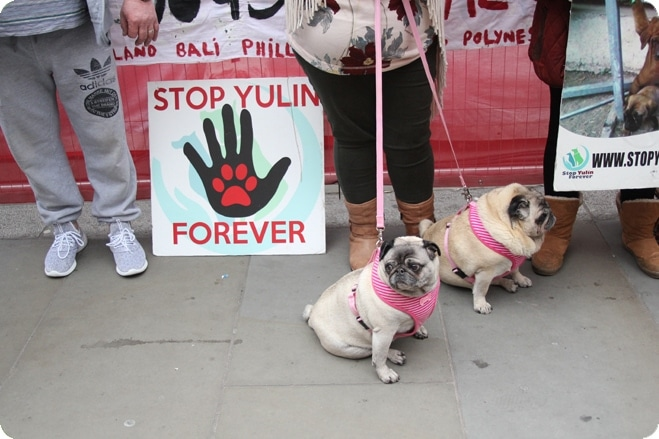 Famous faces beg for an end to China's Yulin dog meat festival