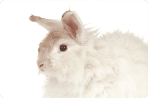 The Agony Behind Angora 7