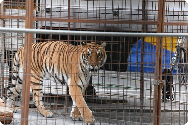 Welsh Government to Ban Wild Animal Circuses