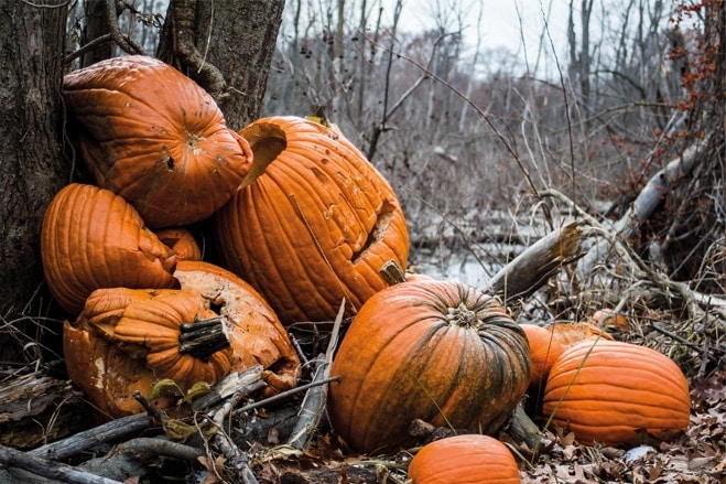 What to do with Halloween pumpkins